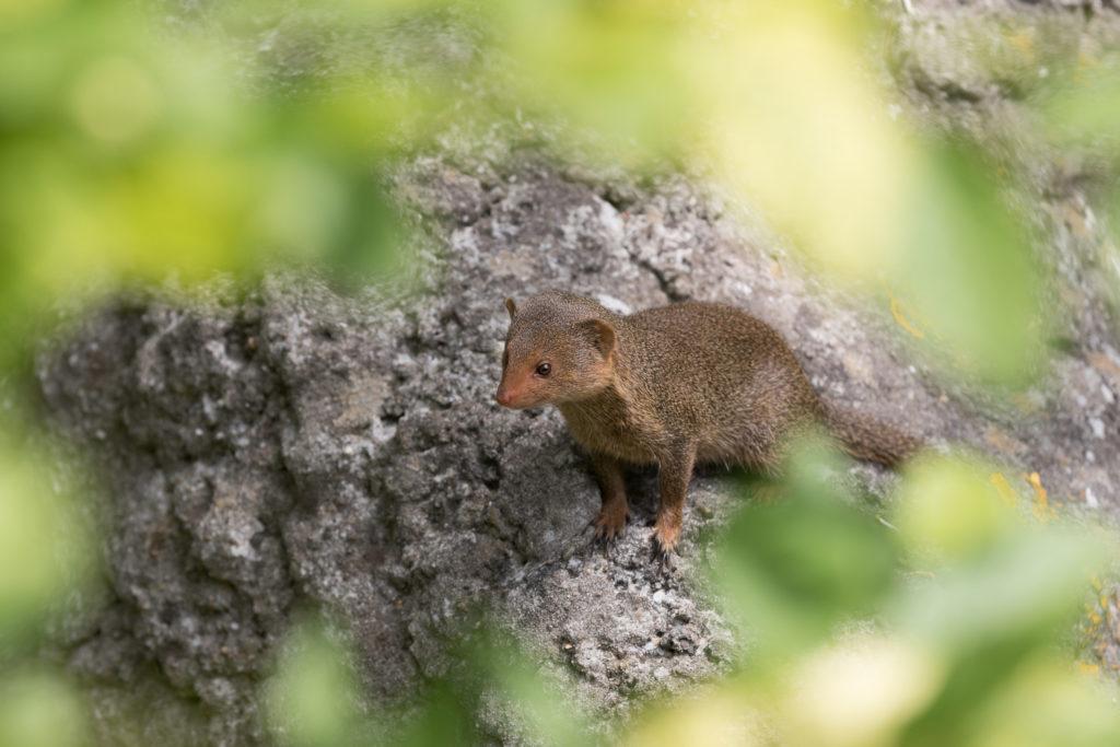 mangoesten fotograferen in Blijdorp
